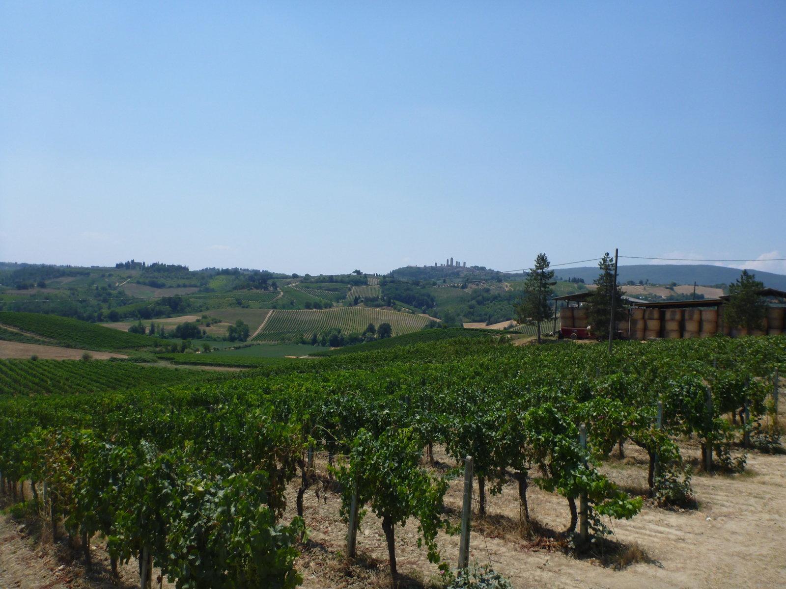 vines Poggio Alloro, Tuscany