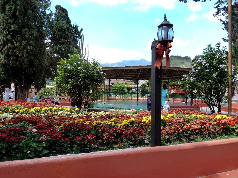 Boquete, Panama Flowers