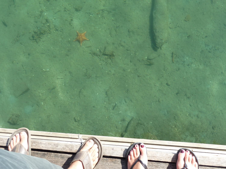 starfish on the docks of bocas del toro