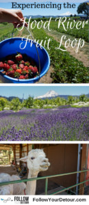 If you're planning to visit Hood River, Oregon then don't miss the Fruit Loop. You can pick strawberries, raspberries, and blueberries, pet and feed alpacas, sip on ciders and craft beer, smell the lavender fields, and more! It's one of the top things to do! #HoodRiver #Oregon and the Columbia Gorge are so beautiful all year long. The area offers skiing and kite surfing as well. It's a U.S. travel bucket list item for sure. Take a road trip there now! It's only an hour from Portland! #fruitloop #alpacas #fruitpicking #lavenderfields #roadtrip