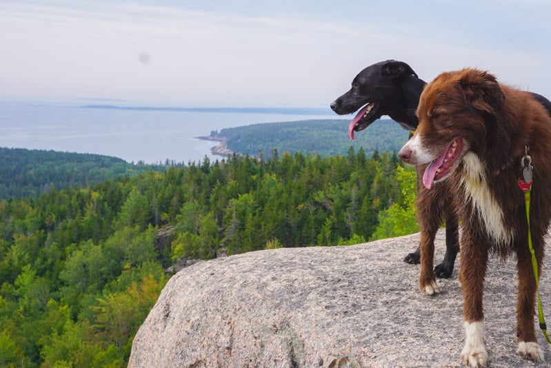 Two dogs looking out over cliff in Acadia National park