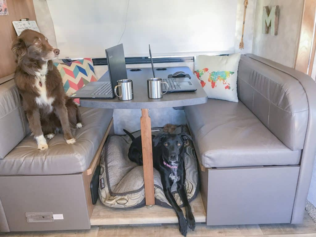 Dog on a computer working