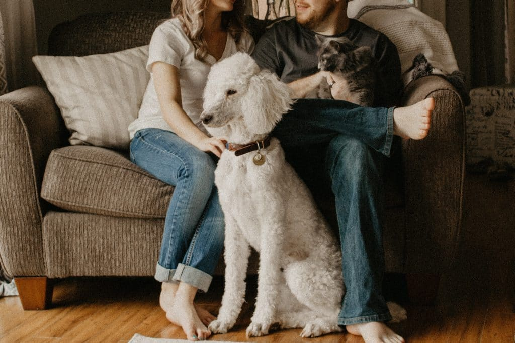 couple on couch with pets