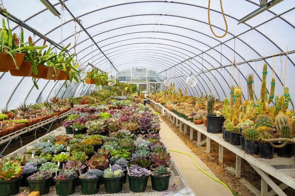 tons of cacti at international peace garden
